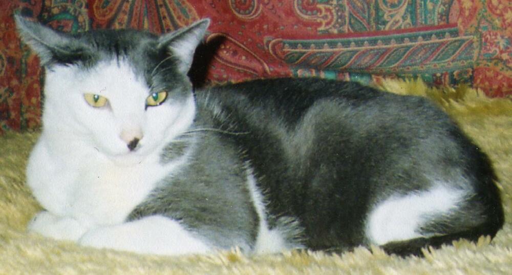 woluwe saint pierre chat Appelez-nous melo poil, woluwe-saint-pierre avis: c'est un superbe salon de toilettage, où on voit tout de suite que le personnel aime les animaux et les.
