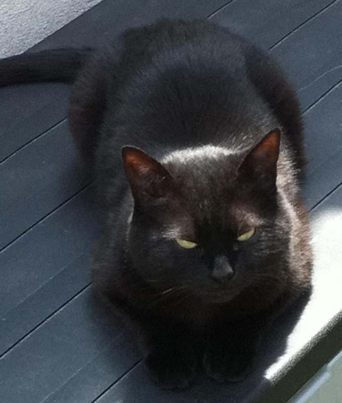 gonflés chatte noire pics